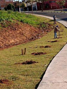 Sumaré realiza arborização urbana com o plantio de 130 mudas de árvores no Salerno