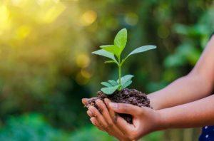 Conselho de Meio Ambiente de Sumaré convida população para reunião extraordinária on-line na segunda-feira, 24 de agosto
