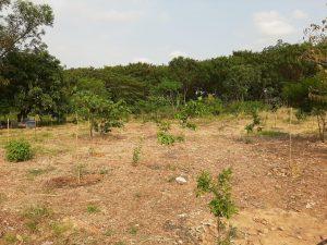 No Dia da Árvore, Prefeitura de Sumaré realiza o plantio de mais de 100 mudas
